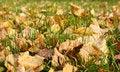 Free Autumn Foliage Stock Photos - 6613203