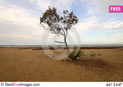 Free Beach Scene Royalty Free Stock Photography - 6615447