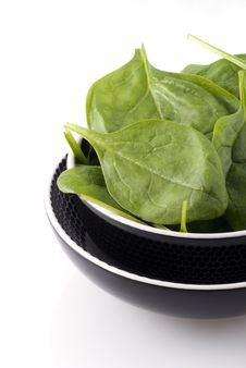 Free Fresh Spinach Stock Photography - 6611842