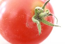 Free Cherry Tomato Stock Image - 6611901
