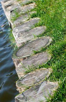 Free Stump01 Stock Image - 6612801