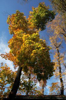 Free Autumn Stock Image - 6612821