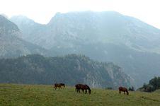 Free Mountains Pasture Royalty Free Stock Photos - 6613018