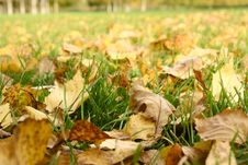 Free Autumn Foliage Royalty Free Stock Images - 6613189