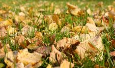 Free Autumn Foliage Stock Photos - 6613203