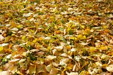 Free Autumn Foliage Stock Photos - 6613223