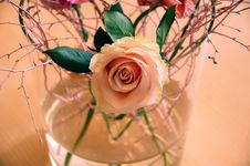Free Rose Flower Ouquet Royalty Free Stock Photography - 6613267