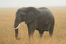 Free Elephant Stock Images - 6613294
