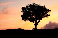 Free Lone Tree Silhouette Royalty Free Stock Photo - 6613515