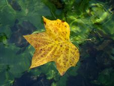 Free Autumn Leaf Royalty Free Stock Photo - 6613645