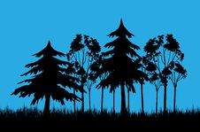Forest In Afternoon Royalty Free Stock Photos