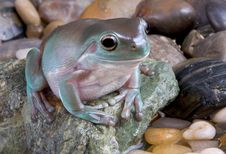Free Frog Near Water Stock Photography - 6615462