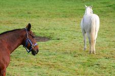Pair Of Horses Royalty Free Stock Photos