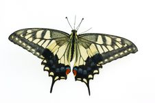 Free Butterfly Royalty Free Stock Image - 6616796