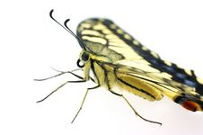 Free Butterfly Profile Royalty Free Stock Images - 6616799