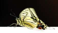 Free Butterfly Stock Photo - 6616800