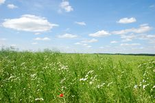 Summer Field Royalty Free Stock Photography
