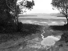 Free Sea Meets Mangroves Stock Image - 6617721