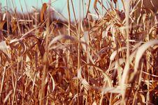 Free Grasses Stock Photos - 6617933