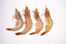 Free Shrimps Royalty Free Stock Image - 6618046