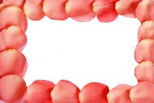 Free Pink Rose Petals Frame Stock Photography - 6618242