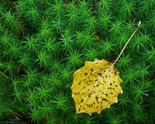 Free Leave On Moss Stock Photos - 6618533