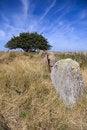 Free Gravesite Stones Stock Image - 6624811