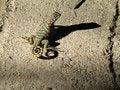 Free Lizard On A Rock Stock Photo - 6629360
