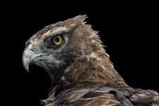 Free Martial Eagle Portrait Royalty Free Stock Photos - 6620988