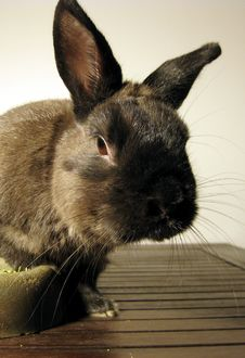 Free Rabbit Mug 2 Stock Photography - 6622002