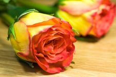 Free Colorful Roses Stock Photos - 6622483