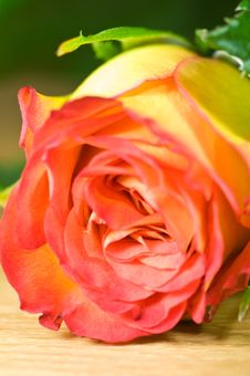 Free Colorful Rose Stock Photography - 6622492