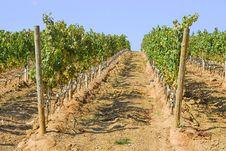 Free View Of A Vinyard Stock Photography - 6622512