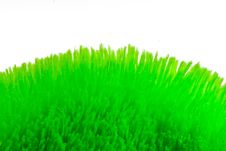 Free Soft Grass Royalty Free Stock Images - 6622569