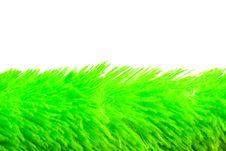 Free Soft Grass Royalty Free Stock Images - 6623019