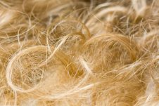Free Blond Hair Royalty Free Stock Image - 6623216