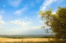 Free Autumn Landscape Royalty Free Stock Images - 6623369