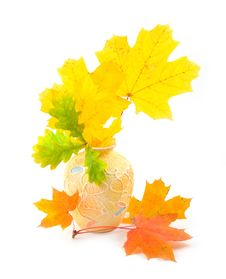 Free Bouquet From Yellow Autumn Branches Stock Images - 6623414