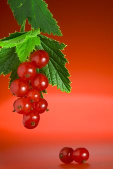 Currant On Red Stock Photography