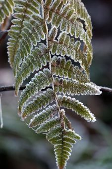 Early Frost On Leaf 2 Royalty Free Stock Image