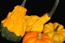 Free Autumn Vegetables 2 Stock Photos - 6624033