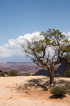 Canyonlands Utah Stock Image