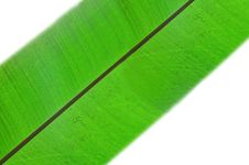 Free Fresh Green Leaf Royalty Free Stock Photo - 6625205