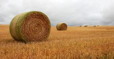 Free Wheat Pack Royalty Free Stock Photo - 6626465
