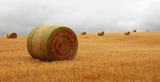 Free Wheat Pack Royalty Free Stock Images - 6626529
