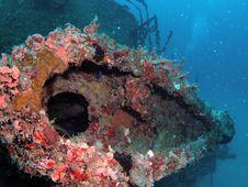 United Caribbean Coral Royalty Free Stock Photos