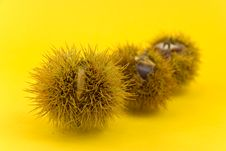 Free Many Ripe Chestnuts On Yellow Background Royalty Free Stock Photo - 6627175