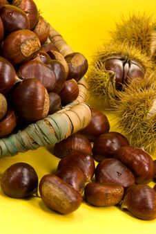 Free Many Ripe Chestnuts On Yellow Background Royalty Free Stock Image - 6627176