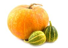 Free Striped Decorative Pumpkins Royalty Free Stock Image - 6627536