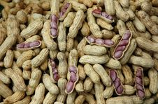 Free Groundnut Ripe Boil Stock Images - 6627664
